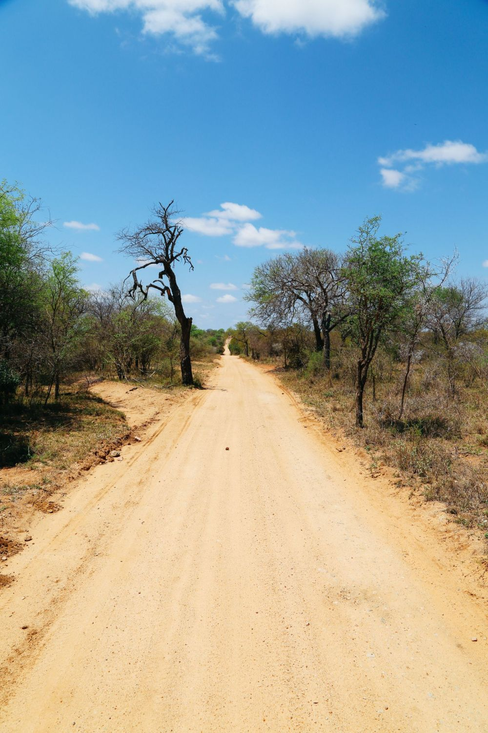 Arriving On Safari In South Africa... (Definitely Not Your Average Airport Transfer!) (19)