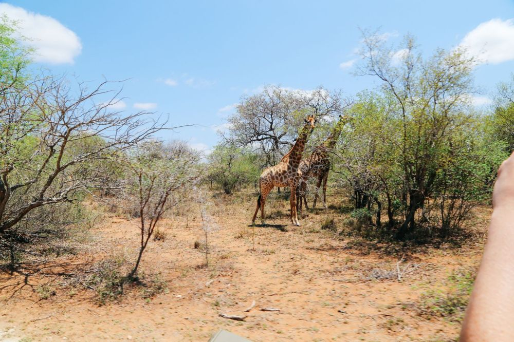 Arriving On Safari In South Africa... (Definitely Not Your Average Airport Transfer!) (20)