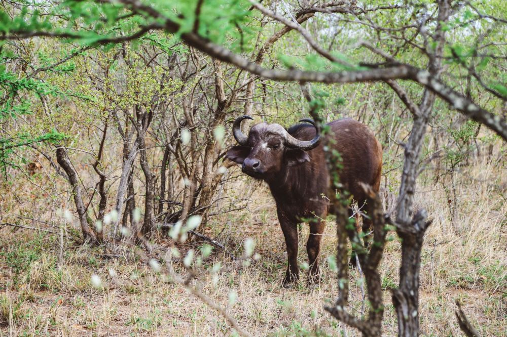 Midnight Lions, Skittish Giraffes And The Deadliest Of The Safari Big 5 In South Africa (8)