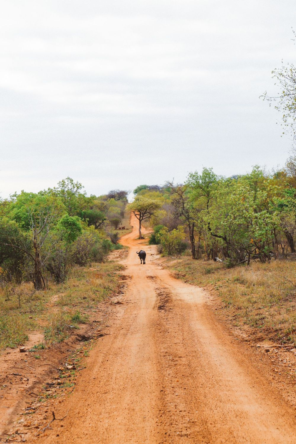 Midnight Lions, Skittish Giraffes And The Deadliest Of The Safari Big 5 In South Africa (9)