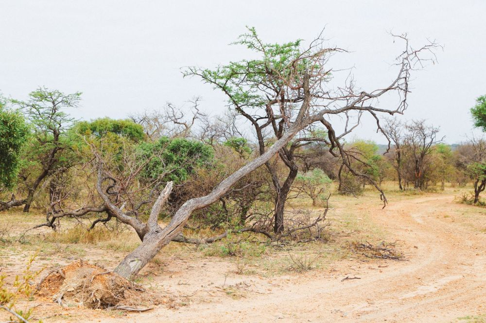 Midnight Lions, Skittish Giraffes And The Deadliest Of The Safari Big 5 In South Africa (21)