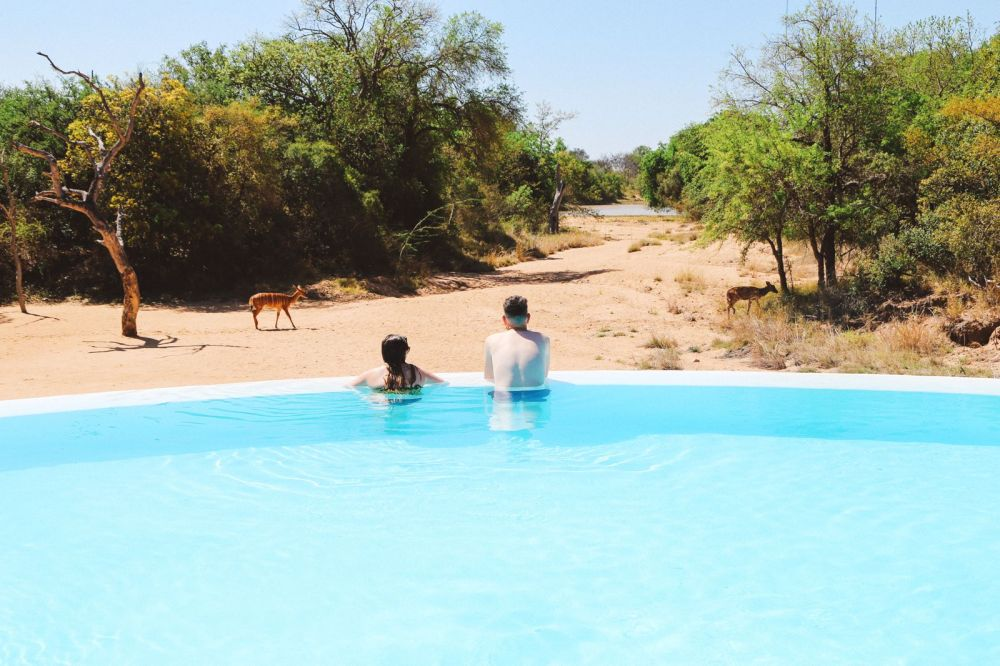 Midnight Lions, Skittish Giraffes And The Deadliest Of The Safari Big 5 In South Africa (31)