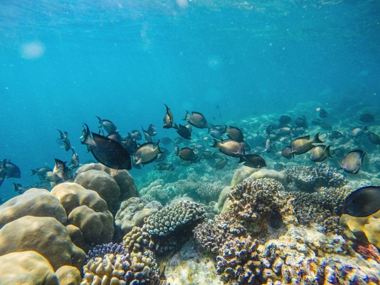 Swimming With Sharks, Turtles, Clownfish And Stingrays In The Maldives (25)