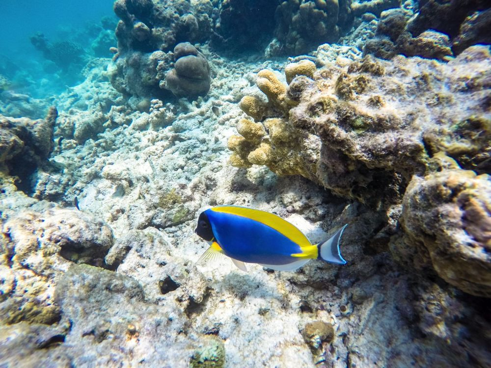 Reef Explorers In The Maldives (35)