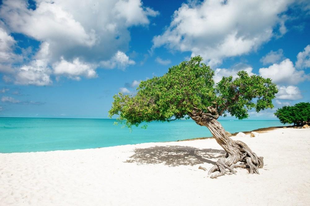 8 Fun Experiences You Need To Have In The Caribbean Island Of Aruba (1)