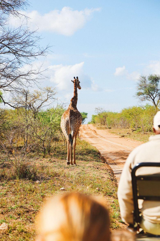 Sunrise Till Sunset - A 24 Hour South African Safari Diary (18)