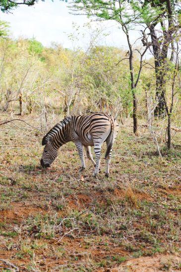 Sunrise Till Sunset - A 24 Hour South African Safari Diary (20)