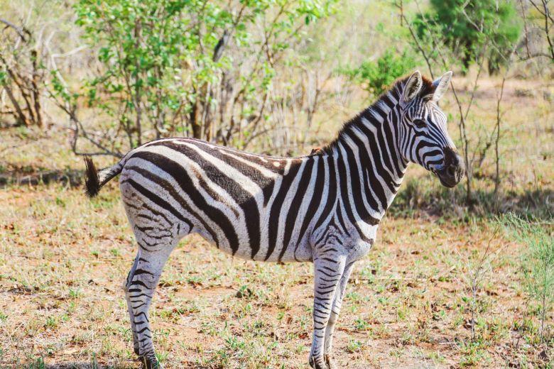 Sunrise Till Sunset - A 24 Hour South African Safari Diary (21)