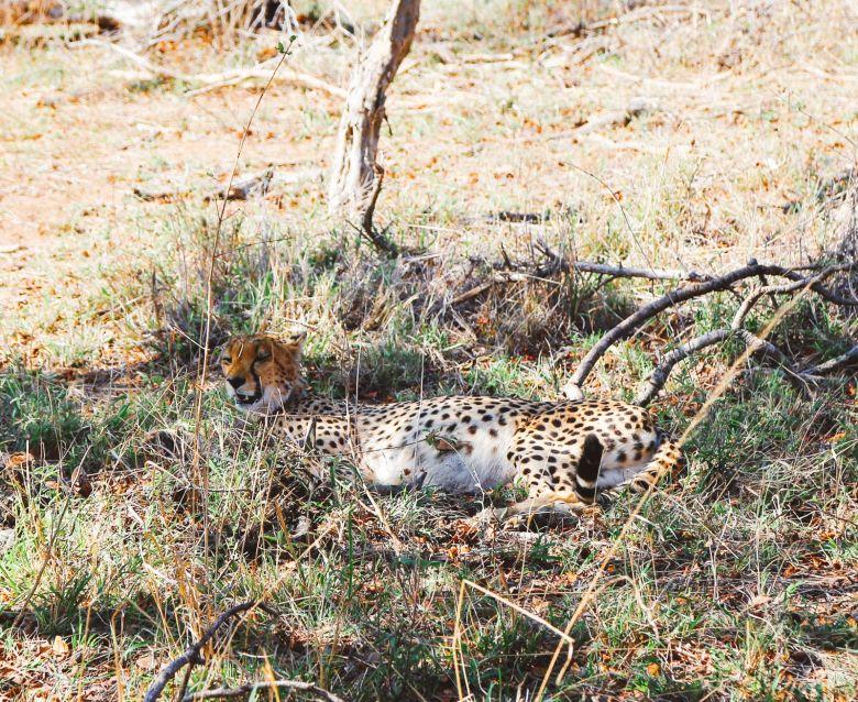 Sunrise Till Sunset - A 24 Hour South African Safari Diary (25)