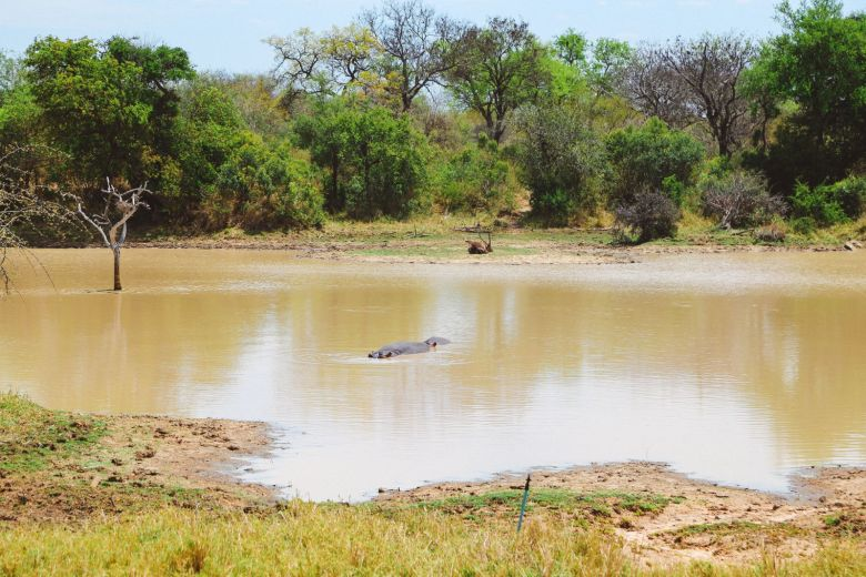 Sunrise Till Sunset - A 24 Hour South African Safari Diary (28)