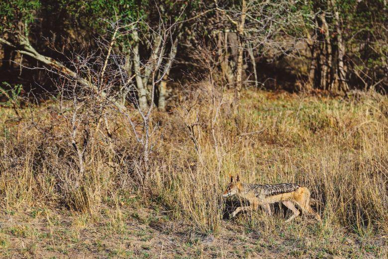 Sunrise Till Sunset - A 24 Hour South African Safari Diary (39)