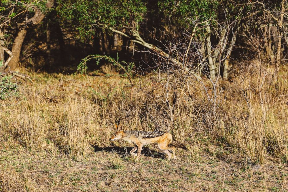 Sunrise Till Sunset - A 24 Hour South African Safari Diary (40)