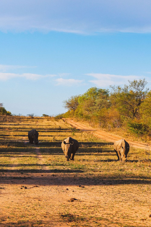 Sunrise Till Sunset - A 24 Hour South African Safari Diary (41)