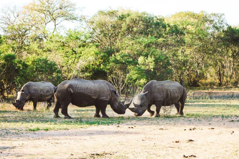 Sunrise Till Sunset - A 24 Hour South African Safari Diary (42)