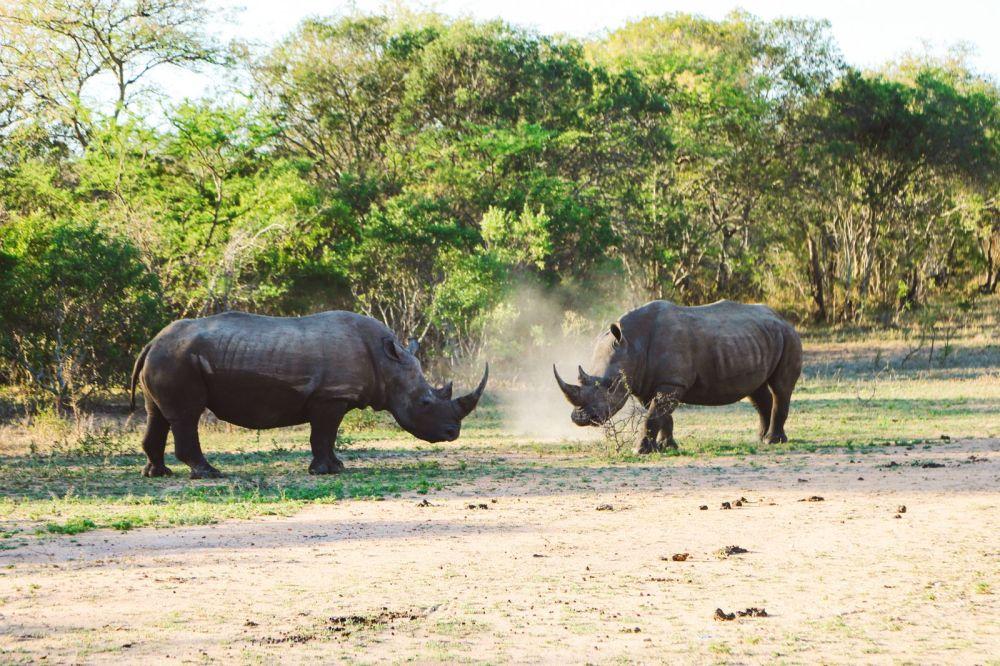 Sunrise Till Sunset - A 24 Hour South African Safari Diary (43)