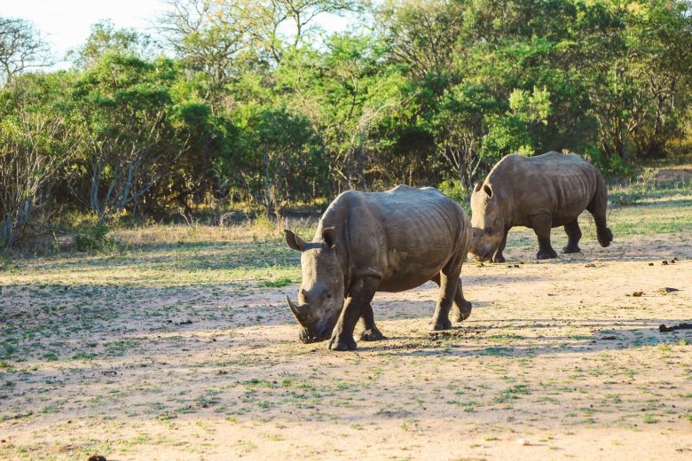 Sunrise Till Sunset - A 24 Hour South African Safari Diary (44)