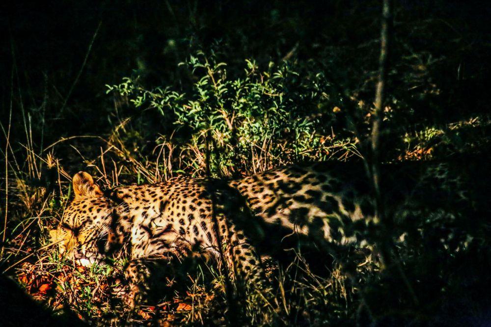 Sunrise Till Sunset - A 24 Hour South African Safari Diary (62)
