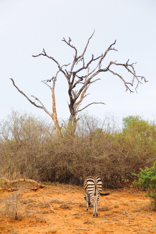 Jungle Love, South Africa (55)