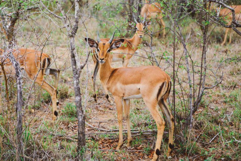 Jungle Love, South Africa (51)