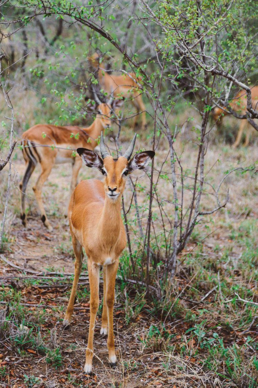 Jungle Love, South Africa (50)