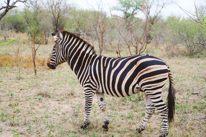 Jungle Love, South Africa (48)