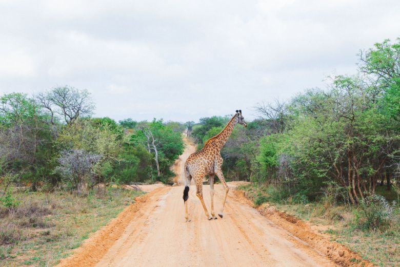 Jungle Love, South Africa (33)