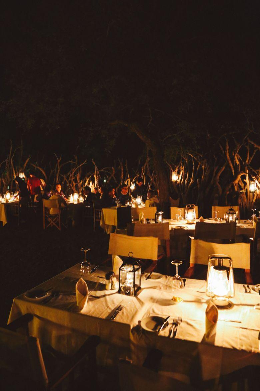 Jungle Love, South Africa (5)