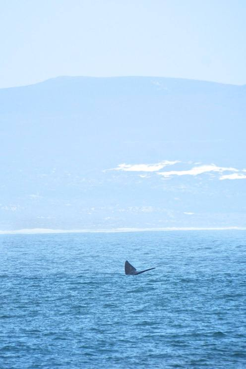 THIS IS THE BEST PLACE TO GO WHALE WATCHING IN SOUTH AFRICA… AND IT HAS WINE!