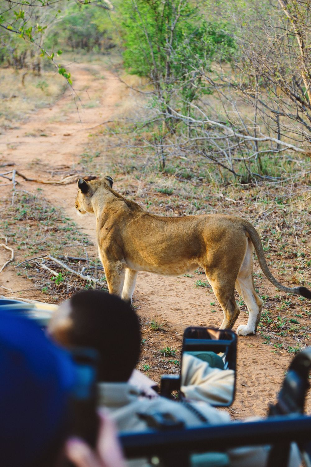 What's It Like To Be Stuck In A Pride Of Lions On Safari In South Africa? (9)