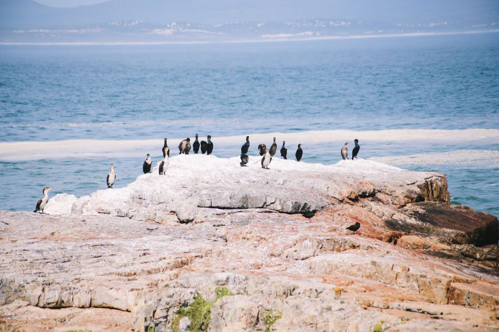 This Is The Best Place To Go Whale Watching In South Africa... And It Has Wine! (17)