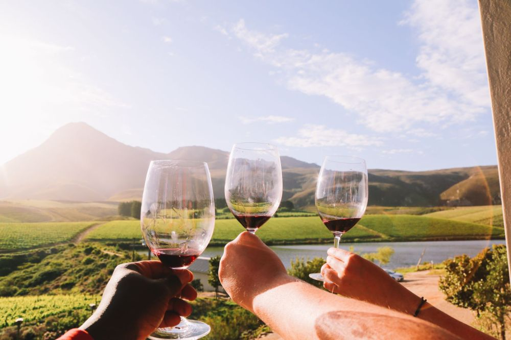 This Is The Best Place To Go Whale Watching In South Africa... And It Has Wine! (37)