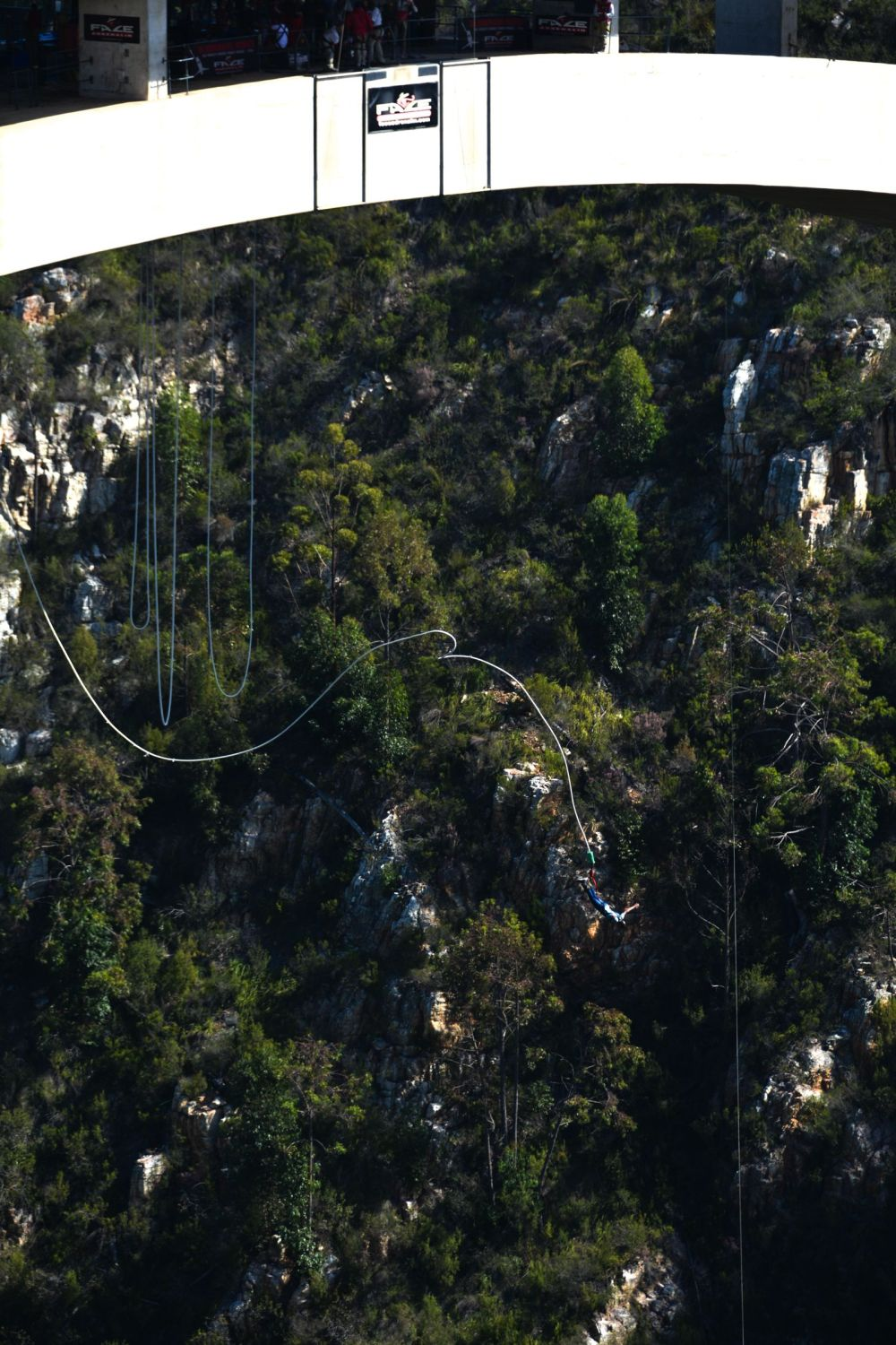 Eastern Cape Adventures In South Africa: Wines, 1,000 Year Old Trees And The Tallest Bungee In The World! (6)