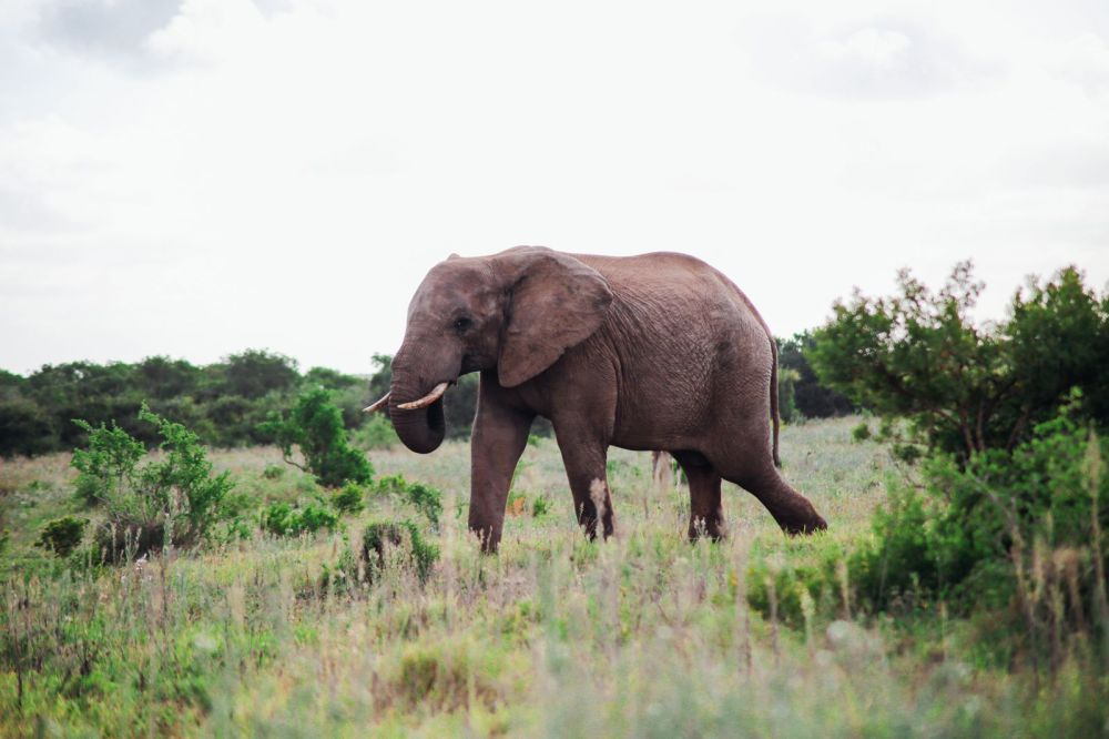 An Afternoon In Addo Elephant Park - A South African Must-Do! (13)