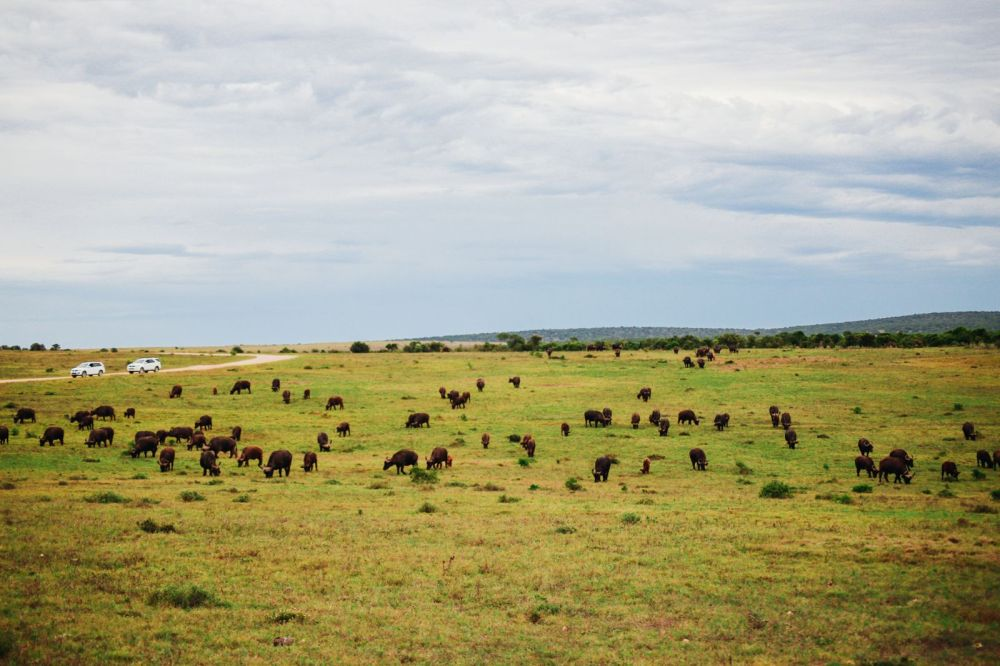 The Last 24 Hours In South Africa's Eastern Cape, Port Elizabeth, Addo National Park (31)