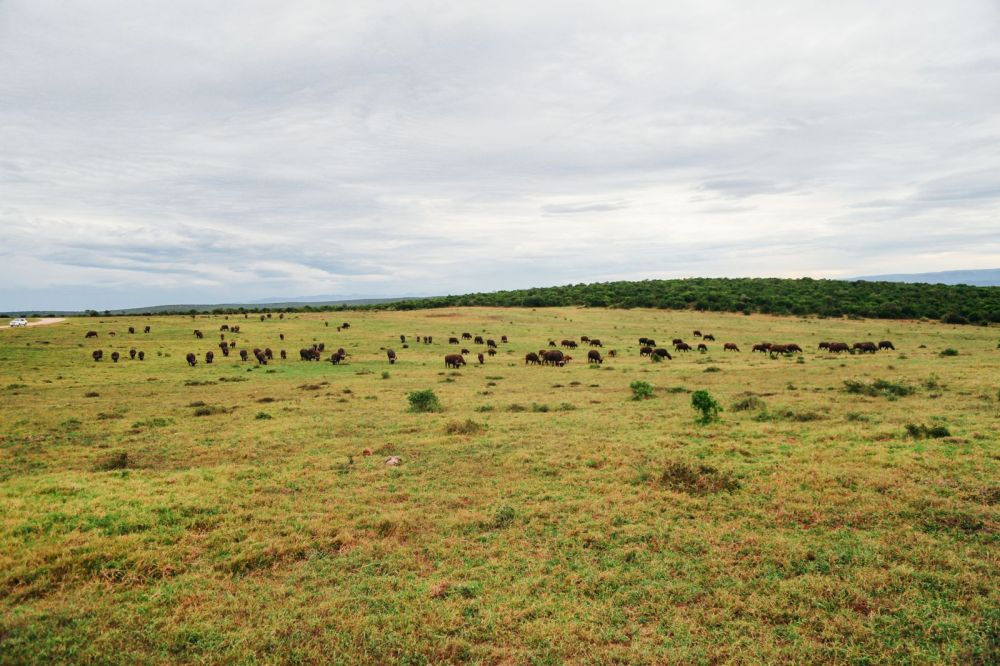 The Last 24 Hours In South Africa's Eastern Cape, Port Elizabeth, Addo National Park (32)