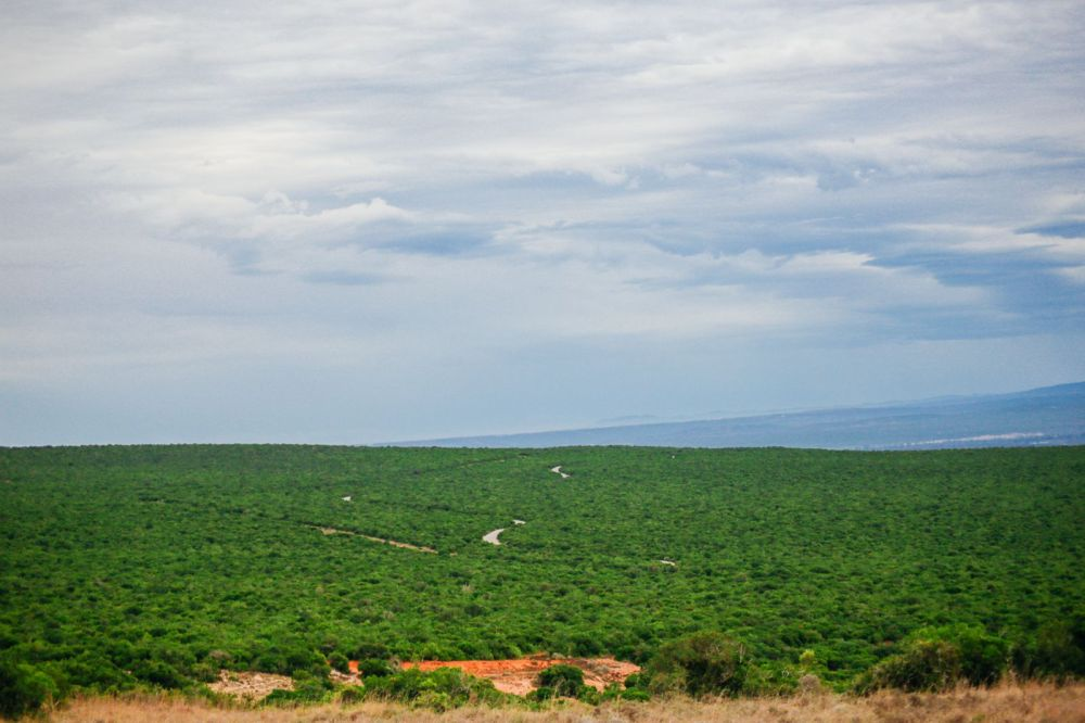 The Last 24 Hours In South Africa's Eastern Cape, Port Elizabeth, Addo National Park (41)