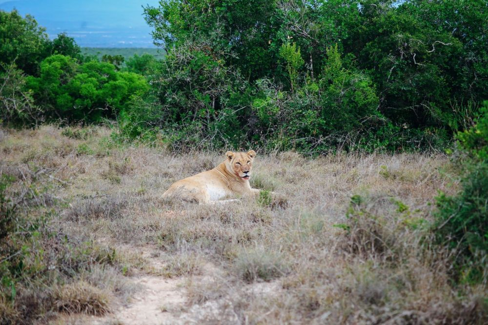 The Last 24 Hours In South Africa's Eastern Cape, Port Elizabeth, Addo National Park (42)