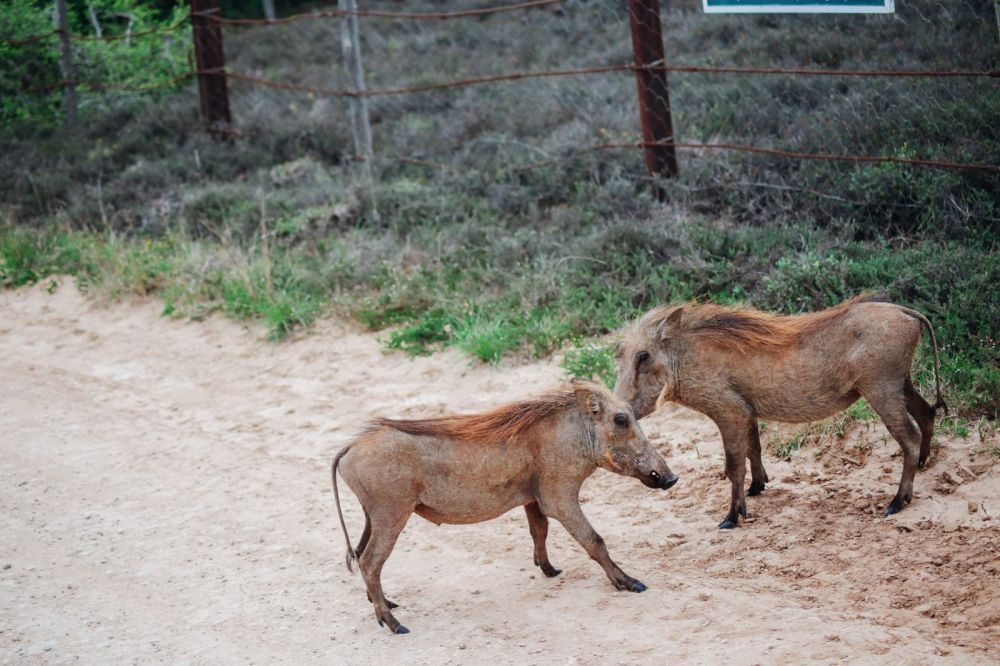 The Last 24 Hours In South Africa's Eastern Cape, Port Elizabeth, Addo National Park (44)
