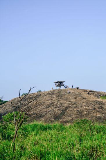 Safari in Mineriya National Park Sri Lanka Elephants (30)