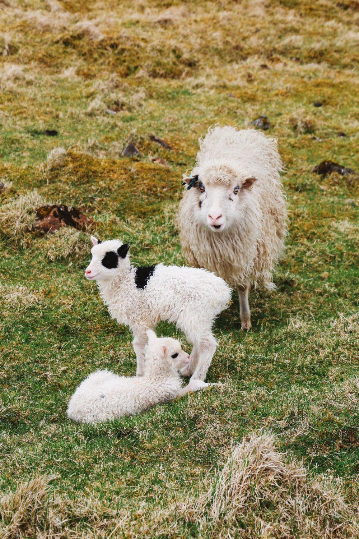 Arrival In The Faroe Islands (13)