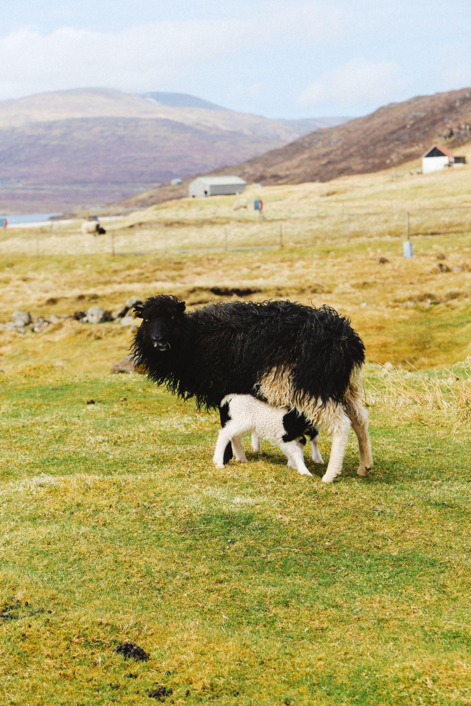 Arrival In The Faroe Islands (44)