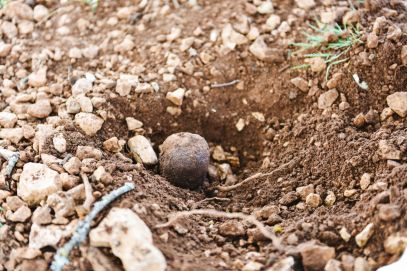 Truffle-Hunting, Chateau-Living And Wine-Tasting In the French Dordogne Valley (5)