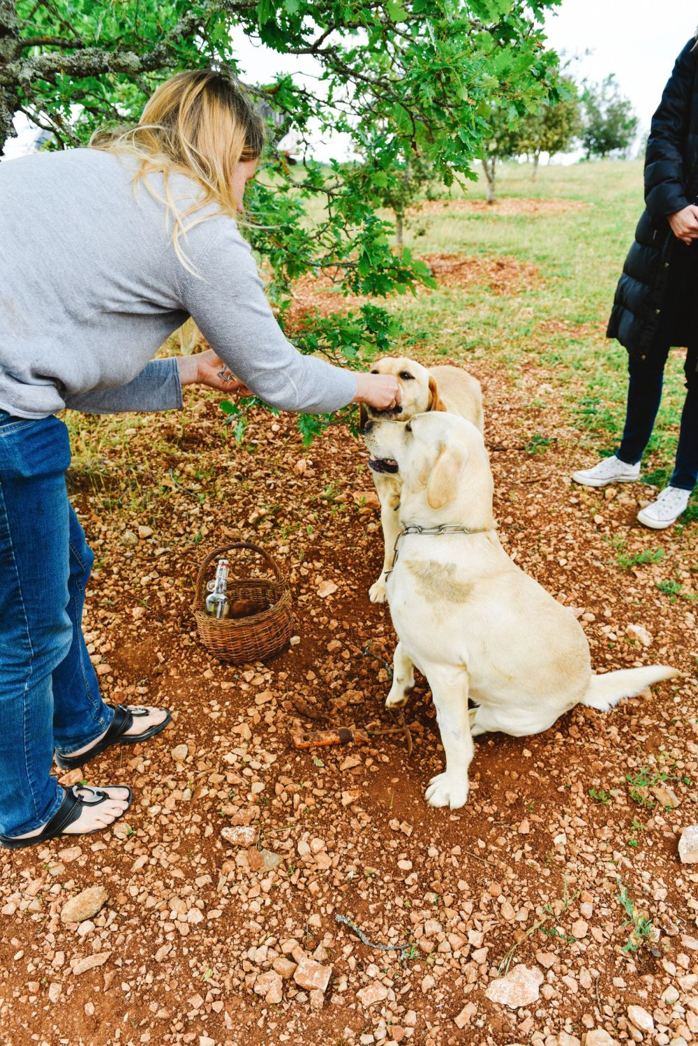 Truffle-Hunting, Chateau-Living And Wine-Tasting In the French Dordogne Valley (6)