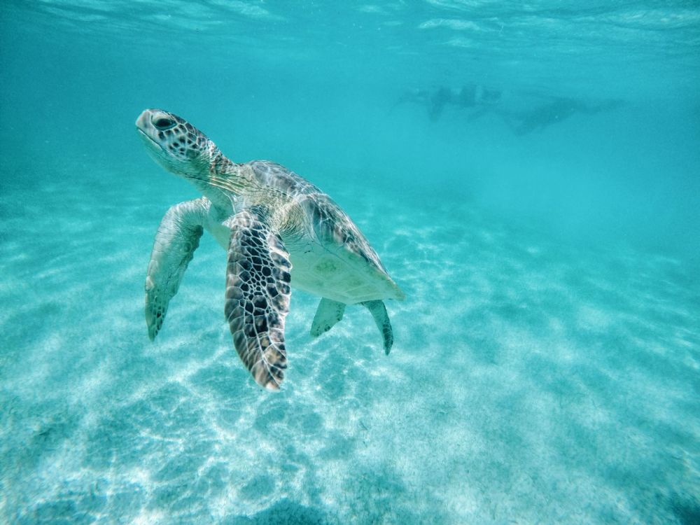 9 Things To Do When You Visit Cancun In Mexico That Don't Involve Partying (49)