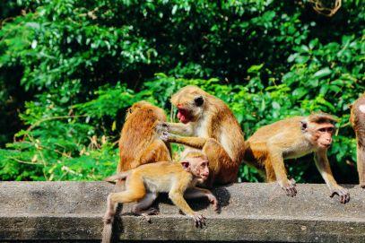 Dambulla Cave Temple And A Trip To Kandy, Sri Lanka (8)