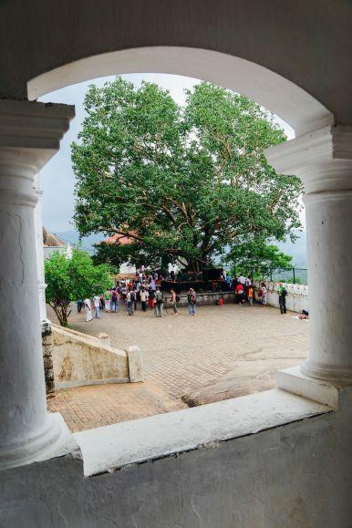 Dambulla Cave Temple And A Trip To Kandy, Sri Lanka (18)