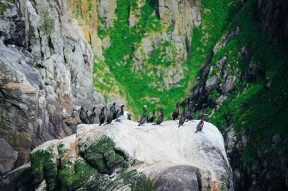 Where To Find Puffins In Norway! (24)