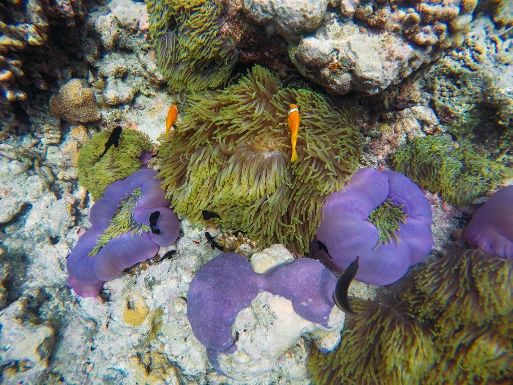 Hello From The Maldives - Angsana Velavaru In Ocean Water Villas (3)