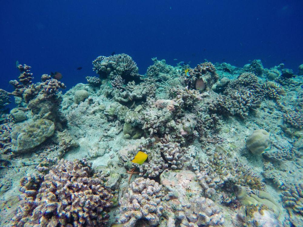 Hello From The Maldives - Angsana Velavaru In Ocean Water Villas (4)
