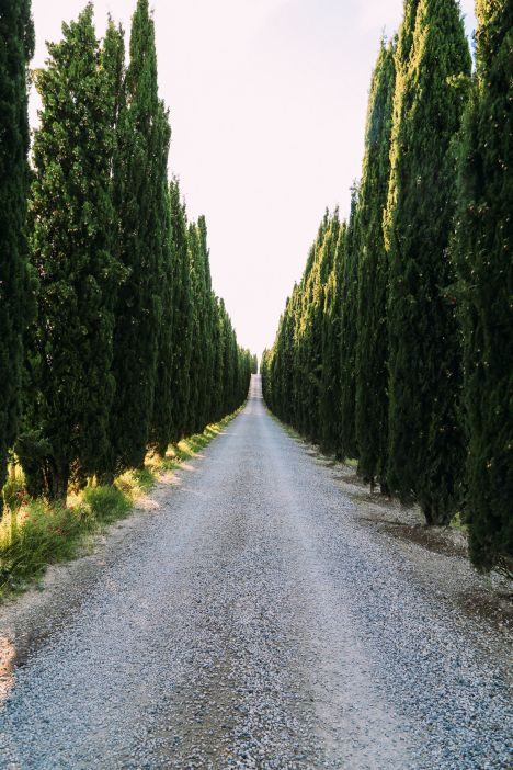 Tuscan Summer Evenings And A Day In Pisa, Italy (1)